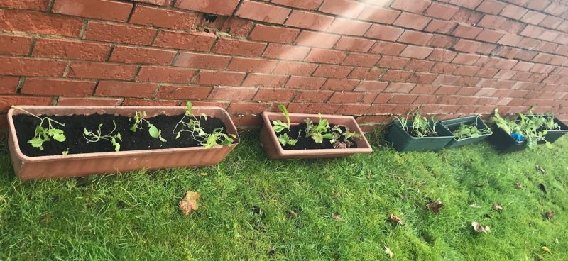 Broad Oak Court Gardening