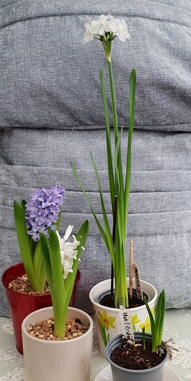 Spring Bulb Project